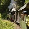 Mocanita train