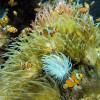 Institut Oceanographique