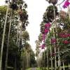 Peradeniya Gardens