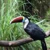 Guyana Zoo